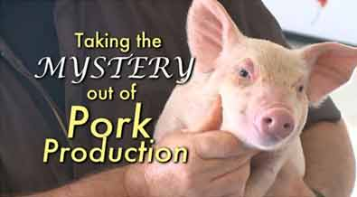 Taking the Mystery out of Pork Production